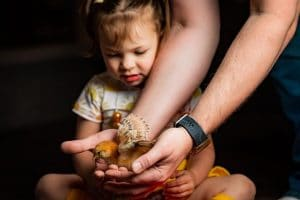 Little Girl with Father's hands holding chick